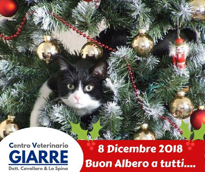 Albero Di Natale 8 Dicembre.Centro Veterinario Giarre 8 Dicembre 2018 Buon Albero Di Natale